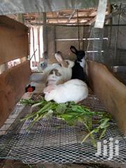 Rabbit Urine For Sale | Feeds, Supplements & Seeds for sale in Central Region, Kampala