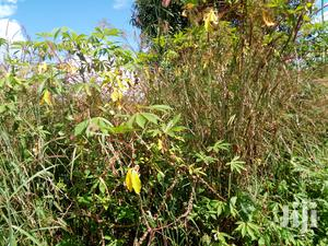 Land With Cassava For Sale
