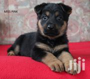 Baby Female Mixed Breed German Shepherd Dog | Dogs & Puppies for sale in Central Region, Kampala