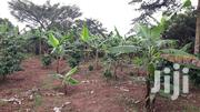 Banana Plantation on Sale 2 Acres, 90% Covered With a Banana Plan,   Land & Plots For Sale for sale in Central Region, Kampala