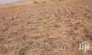 2 Acre Land In Gulu Chopil For Sale