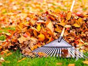 Fastest Lawners Ever   Cleaning Services for sale in Central Region, Kampala