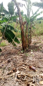 56 Acres Of Agricultural Land On Sale | Land & Plots For Sale for sale in Western Region, Kamwenge