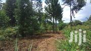 *14 Beautiful Acres Private Milo Land Title, on Sale KATOSI MUKONO | Land & Plots For Sale for sale in Central Region, Kampala