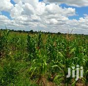30 Acres of Land in Zirobwe Town for Sale Each Acre Is at 8million | Land & Plots For Sale for sale in Central Region, Kampala