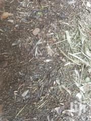 Rabbit Manure Available | Feeds, Supplements & Seeds for sale in Central Region, Mukono